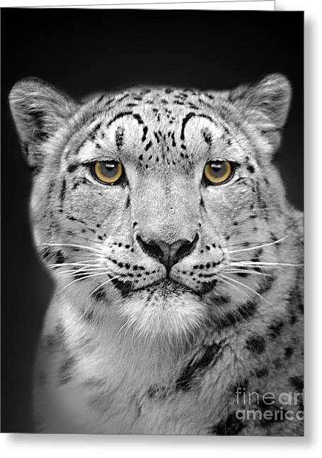 Moggy Greeting Cards - Portrait Of A Snow Leopard Greeting Card by Linsey Williams