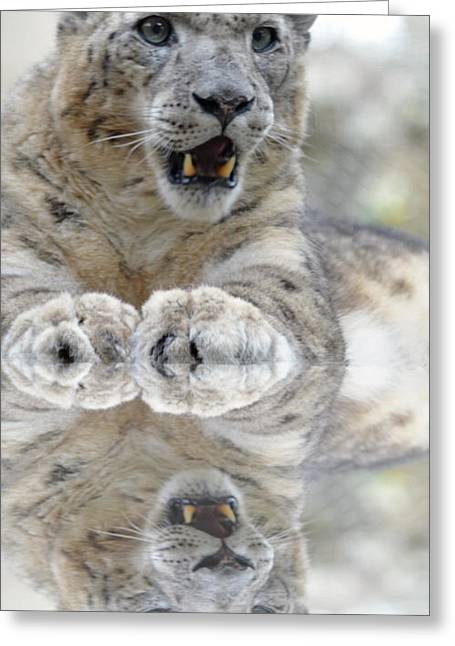 Jim Fitzpatrick Greeting Cards - Portrait of a Snow Leopard with a Reflection Greeting Card by Jim Fitzpatrick