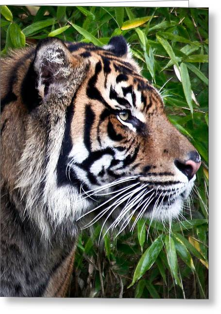 The Tiger Greeting Cards - Profile Of A Sumatran Tiger Greeting Card by Athena Mckinzie