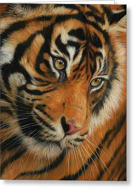 Tigress Greeting Cards - Portrait of a Tiger Greeting Card by David Stribbling