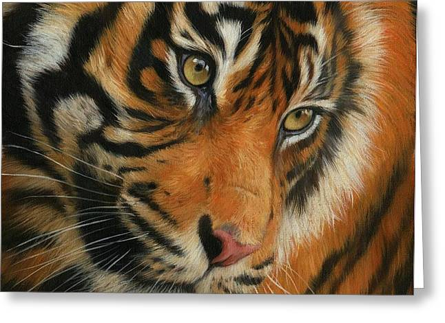 Portrait of a Tiger Greeting Card by David Stribbling