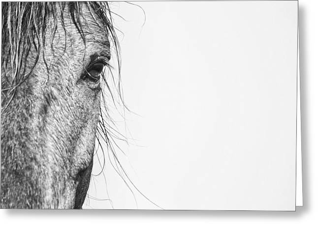 Rachel Carson Greeting Cards - Portrait of a Wild Mustang Greeting Card by Bob Decker