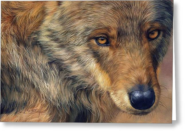 Portrait Of A Wolf Greeting Card by David Stribbling