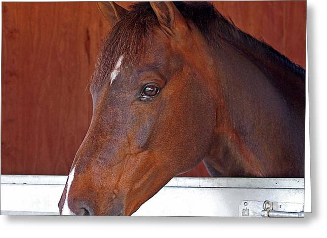 Yearling Horse Greeting Cards - Portrait Of A Young Stallion Greeting Card by Gill Billington