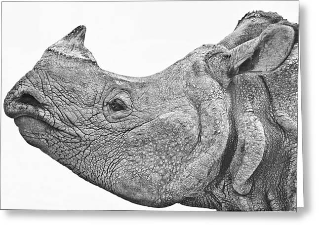 Recently Sold -  - Rhinoceros Greeting Cards - Portrait of an Asian one-horned rhinoceros Greeting Card by Urs Schweitzer
