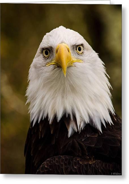 Hunting Bird Greeting Cards - Portrait Of An Eagle Greeting Card by Jordan Blackstone