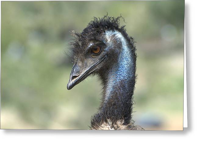 Emu Greeting Cards - Portrait Of An Emu Greeting Card by Fraida Gutovich