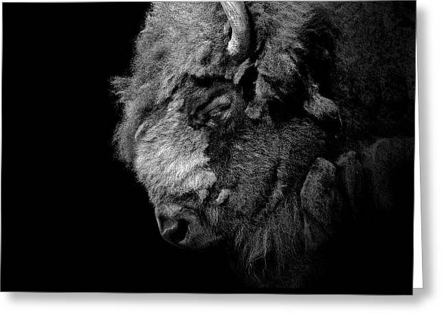 Zoo Greeting Cards - Portrait of Buffalo in black and white Greeting Card by Lukas Holas