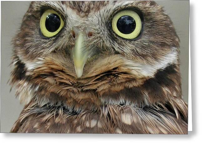 Ben Gertsberg Greeting Cards - Portrait Of Burrowing Owl Greeting Card by Ben and Raisa Gertsberg
