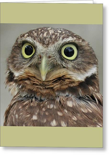 Portrait Of Burrowing Owl Greeting Card by Ben and Raisa Gertsberg