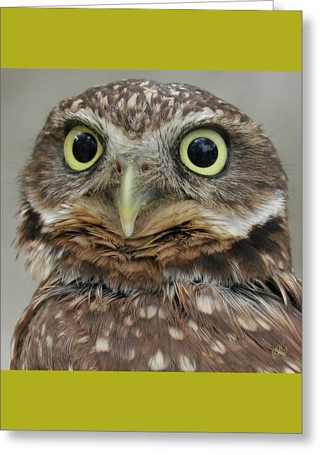 Funny Face Greeting Cards - Portrait Of Burrowing Owl Greeting Card by Ben and Raisa Gertsberg