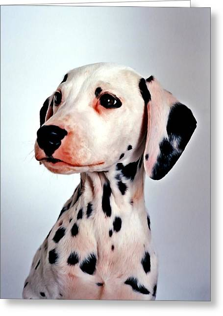 Camera Paintings Greeting Cards - Portrait of dalmatian dog Greeting Card by Lanjee Chee