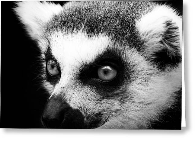Portrait Of Lemur In Black And White Greeting Card by Lukas Holas