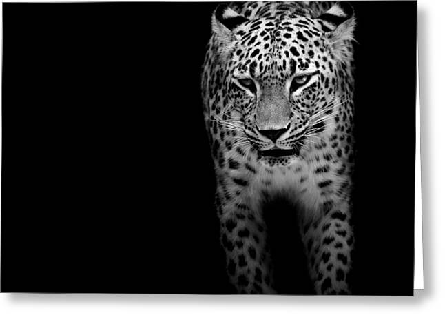 Zoo Greeting Cards - Portrait of Leopard in black and white II Greeting Card by Lukas Holas