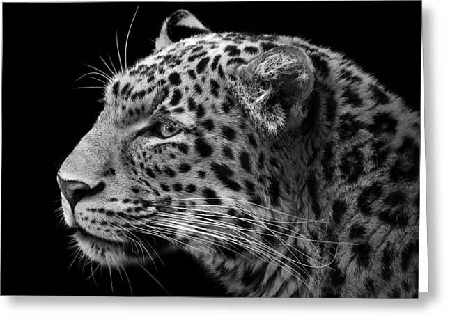 Leopards Greeting Cards - Portrait of Leopard in black and white III Greeting Card by Lukas Holas