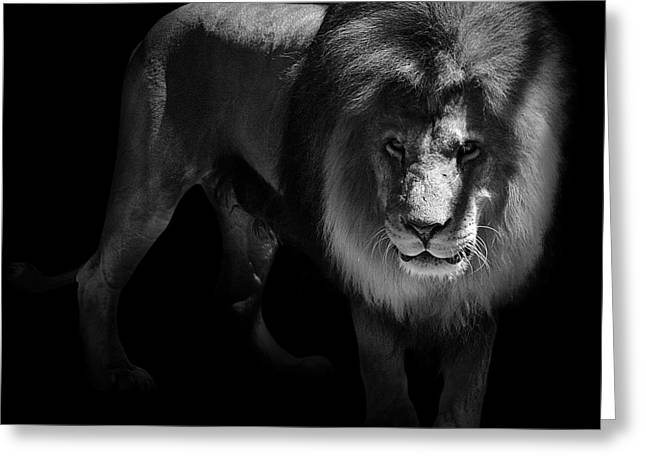 Lions Photographs Greeting Cards - Portrait of Lion in black and white Greeting Card by Lukas Holas
