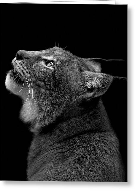 Zoo Greeting Cards - Portrait of Lynx in black and white Greeting Card by Lukas Holas