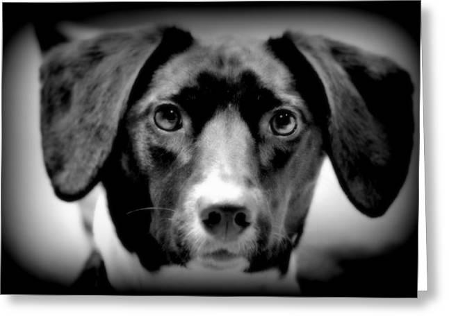 Portrait Of Man's Best Friend II Greeting Card by Aurelio Zucco
