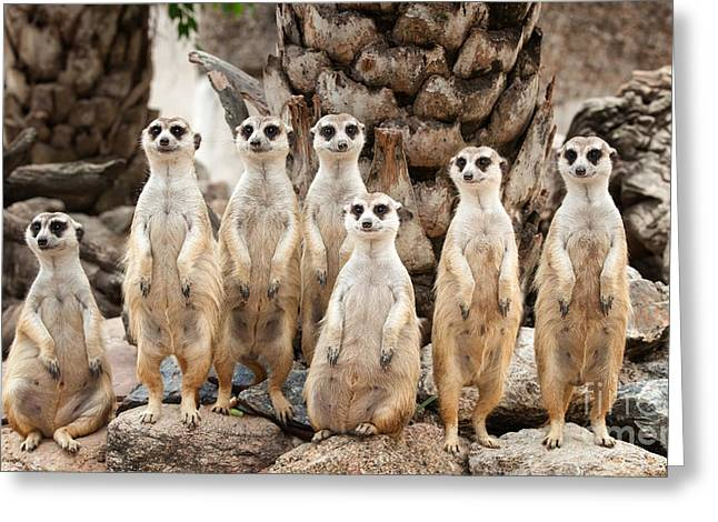 Mouth Guard Greeting Cards - Portrait of meerkat family Greeting Card by Anek Suwannaphoom
