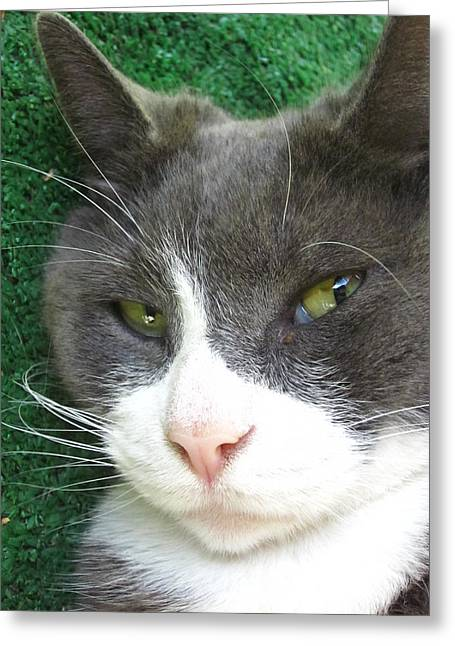 Guy Ricketts Photography And Art Greeting Cards - Portrait Of Morty Greeting Card by Guy Ricketts