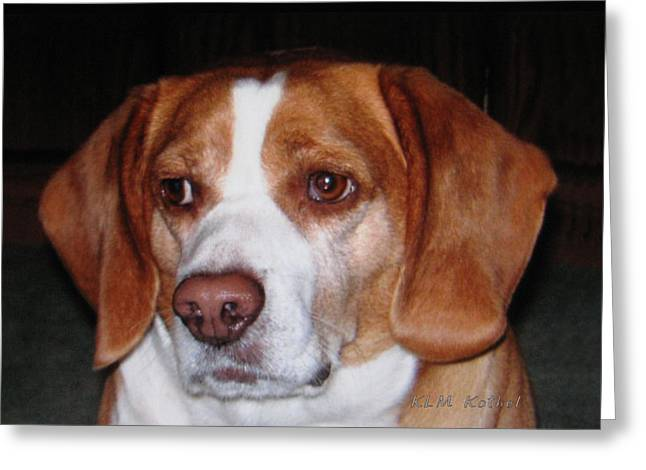 Beagle Puppies Print Greeting Cards - Portrait of Rusty Greeting Card by Klm