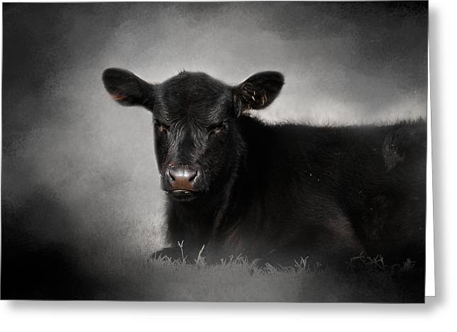 Cattle Farming Greeting Cards - Portrait of the Black Angus Calf Greeting Card by Jai Johnson