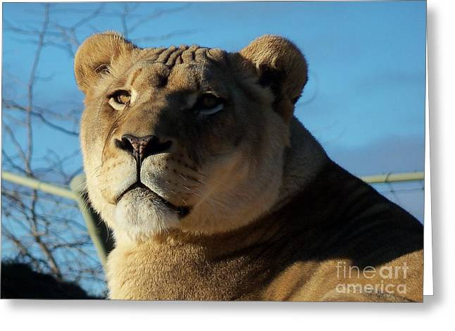 Lioness Greeting Cards - Portrait of The Mighty Queen Greeting Card by Lingfai Leung