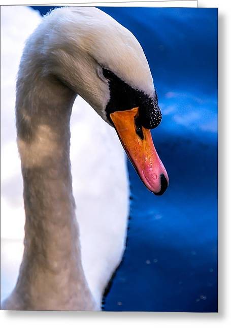 Orange Beak Greeting Cards - Portrait of the Shy White Swan Greeting Card by Jenny Rainbow