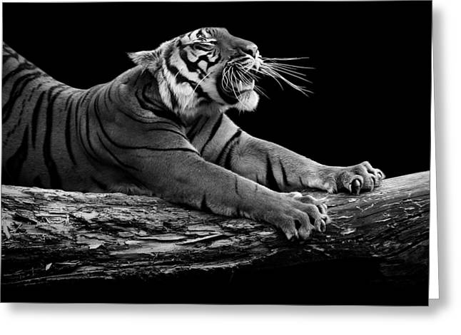 Tigers Greeting Cards - Portrait of Tiger in black and white Greeting Card by Lukas Holas