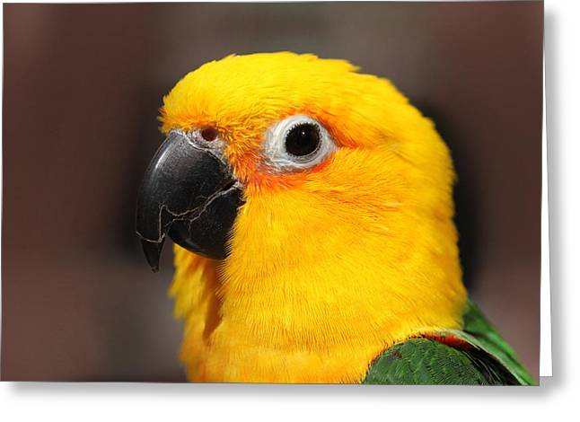 Andrea Lazar Greeting Cards - Portrait of Tinga Greeting Card by  Andrea Lazar