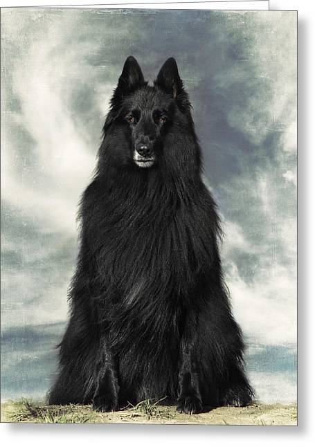 Shepherds Greeting Cards - Portrait of WolfCub Belgian Shepherd Groenendael Greeting Card by Wolf Shadow  Photography