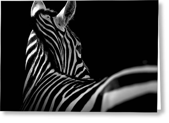 White Photographs Greeting Cards - Portrait of Zebra in black and white II Greeting Card by Lukas Holas