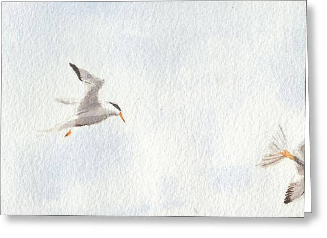 Tern Greeting Cards - Portsmouth Birds Greeting Card by John Forcucci