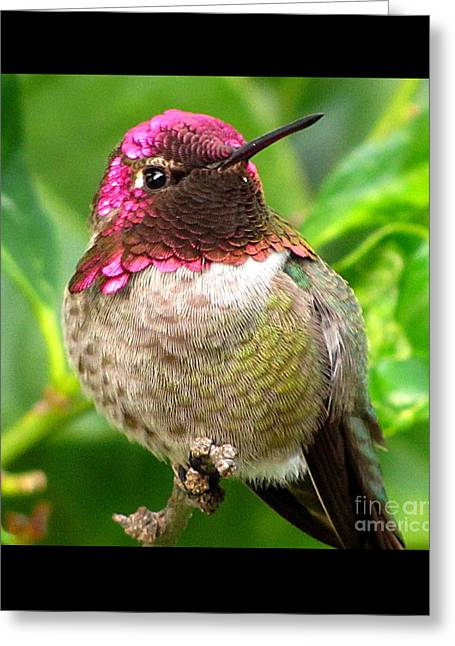 Posing For You Greeting Card by Marilyn Smith