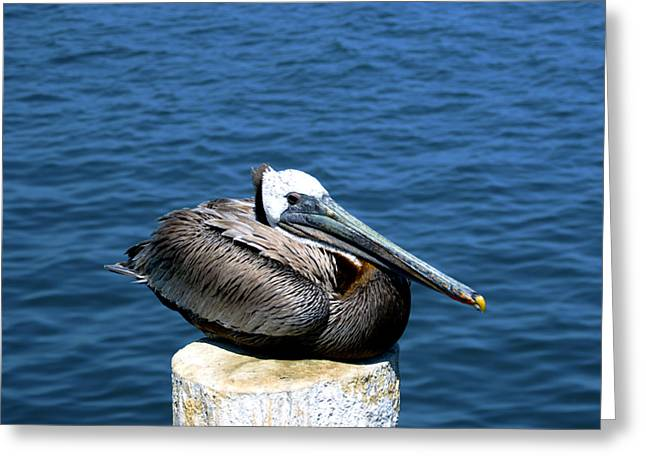 Stearns Wharf Greeting Cards - Posing Pelican at Stearns Wharf 2 Greeting Card by Barbara Snyder