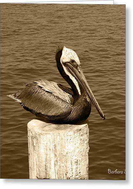 Stearns Wharf Greeting Cards - Posing Pelican at Stearns Wharf Sepia Greeting Card by Barbara Snyder