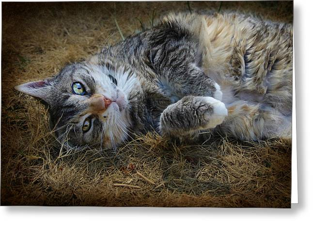 Moggy Greeting Cards - Posing Prettily Greeting Card by Marilyn Wilson