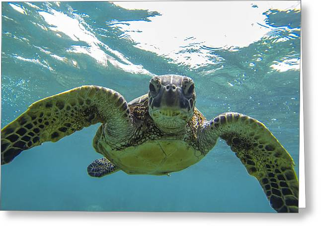 Sealife Greeting Cards - Posing Sea Turtle Greeting Card by Brad Scott