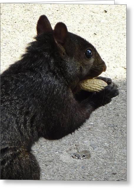 Guy Ricketts Photography Greeting Cards - Possession of Peanut Greeting Card by Guy Ricketts