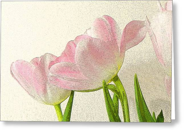 Pale Pink Greeting Cards - Posterised petals Greeting Card by Sharon Lisa Clarke