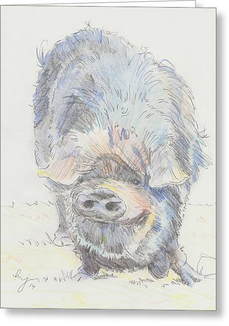 Hairy Pig Greeting Cards - Pot Bellied Pig Greeting Card by Mike Jory