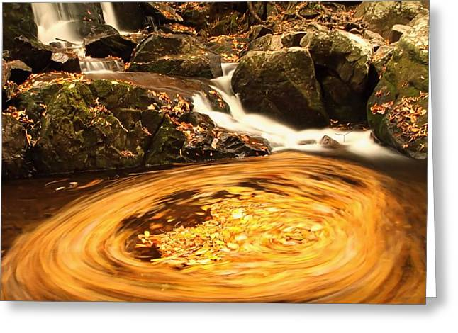 Water Flowing Greeting Cards - Pot Of Gold In Great Smoky Mountain National Park Greeting Card by Dan Sproul