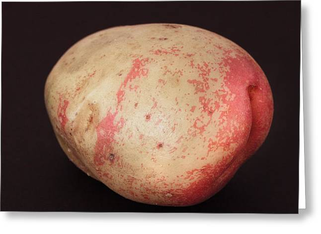 Beige Background Greeting Cards - Potato Greeting Card by Tom Gowanlock