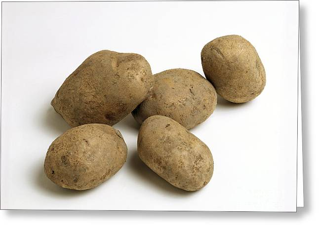 Starchy Greeting Cards - Potatoes Greeting Card by G. Buttner/Okapia
