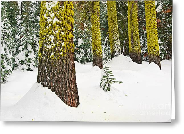 Winter Scenes Rural Scenes Greeting Cards - Potential - Winter scene of Badger Pass in Yosemite National Park Greeting Card by Jamie Pham