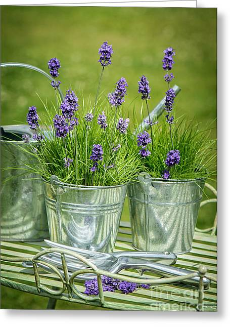 Pots Of Lavender Greeting Card by Amanda And Christopher Elwell