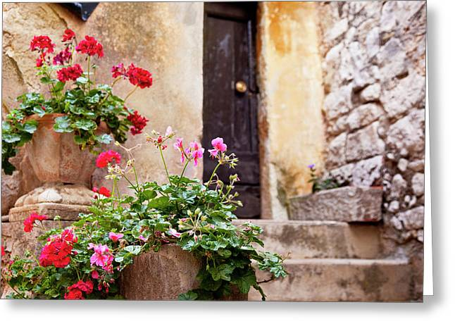 Potted Flowers Line The Entryway Greeting Card by Brian Jannsen