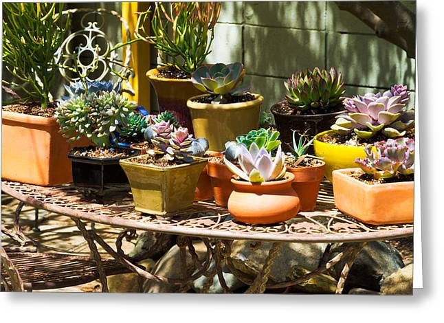 Potted Succulents  Greeting Card by Bernard  Barcos