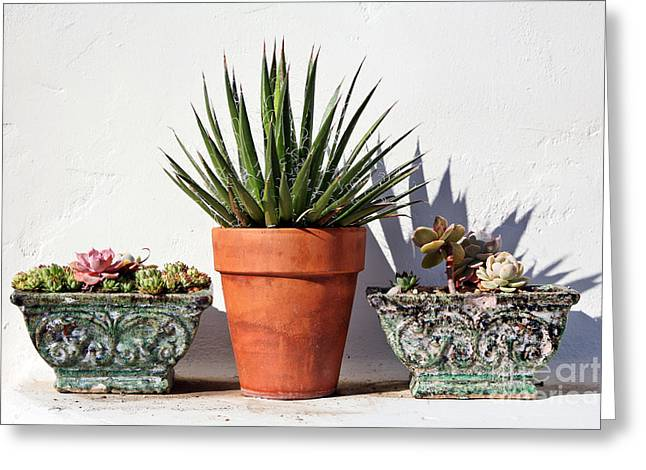 Kate Mckenna Greeting Cards - Potted Succulents Greeting Card by Kate McKenna