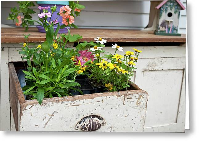 Potting Bench With Flowers In Spring Greeting Card by Richard and Susan Day